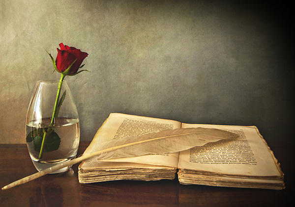 still life in chiaroscuro: opened antique book, a swan feather and a red rose in a vase